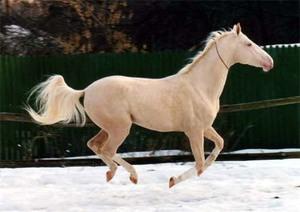Лошади изабелловой масти происхождение и в каких породах встречается