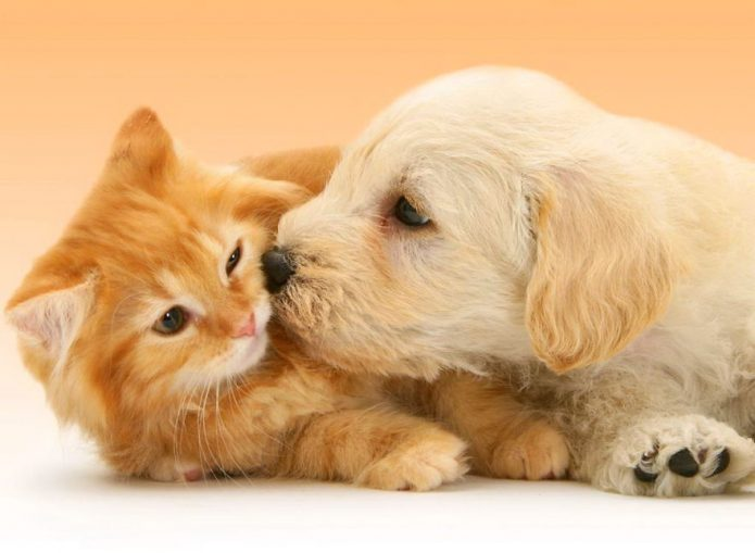 Рыжий котёнок и щенок