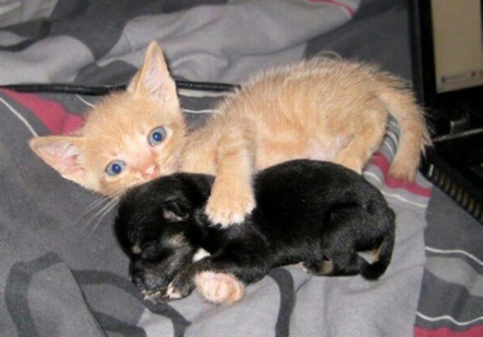 Котёнок обнимает черного щенка