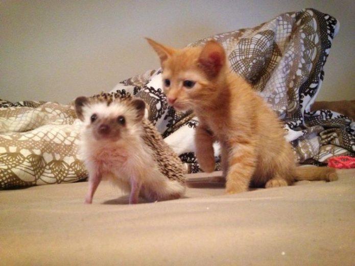 Котёнок и ёжик