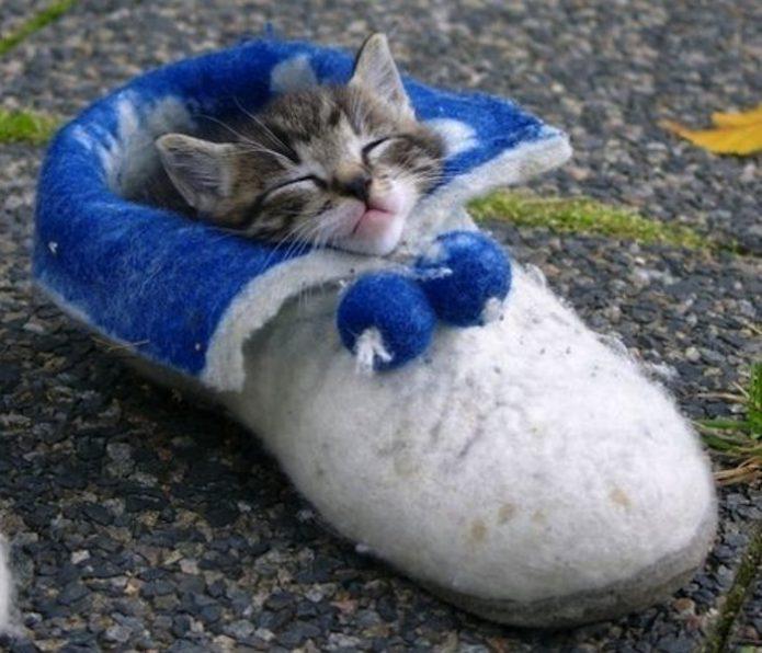 Котёнок в валенке