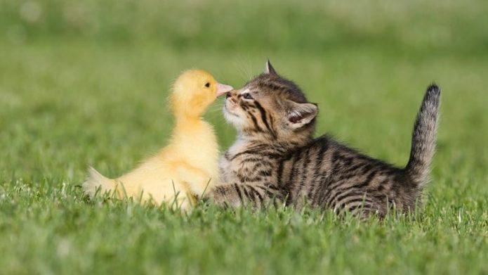 Котёнок и птенец
