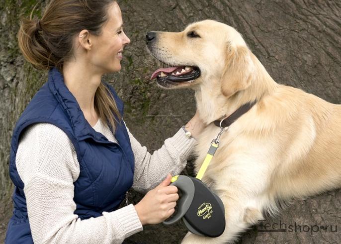 Поводок-рулетка для собак больших и маленьких пород: обзор лучших вариантов и ценами, фото и отзывами