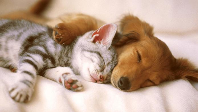 Котёнок и щенок спят вместе
