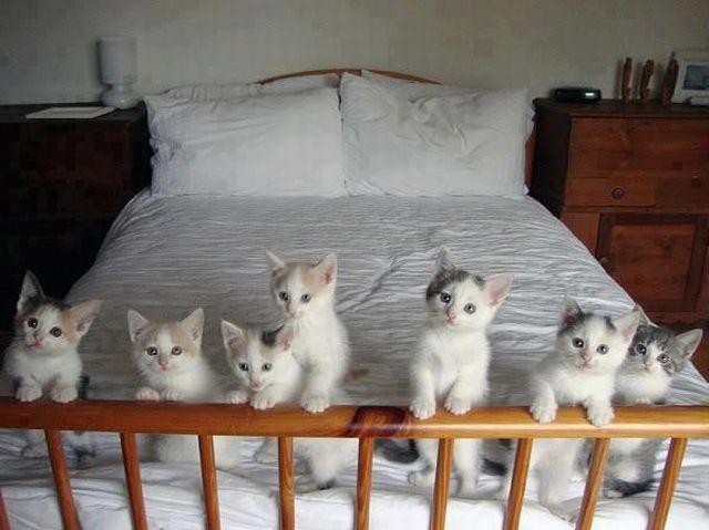 Белые котята на кровати