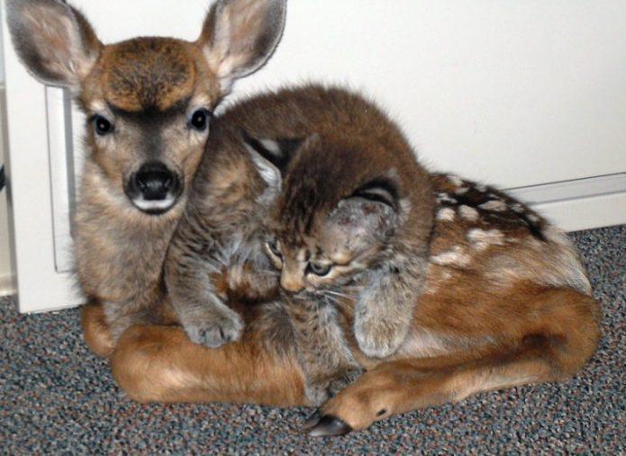 Прикольный котёнок и оленёнок