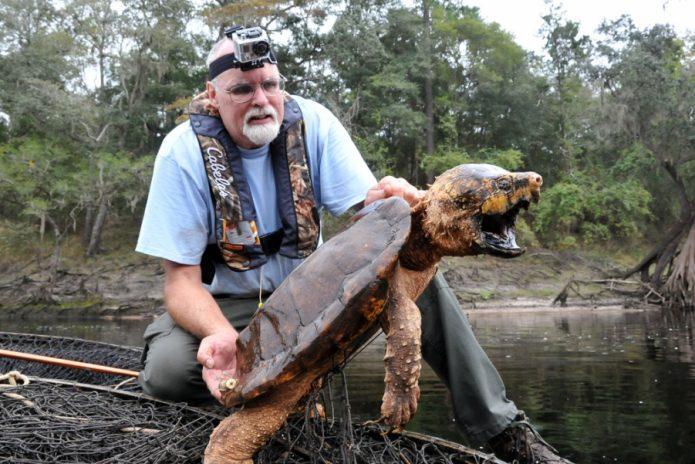 Грифовая черепаха с человеком