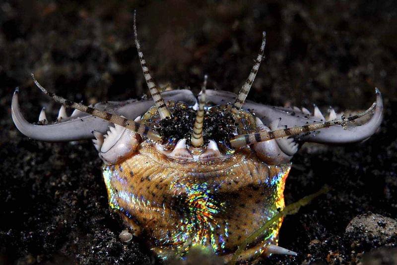 Морской обитатель червь Бобб