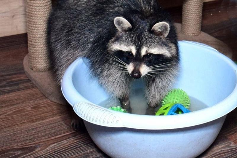 Пытается мыть все вокруг