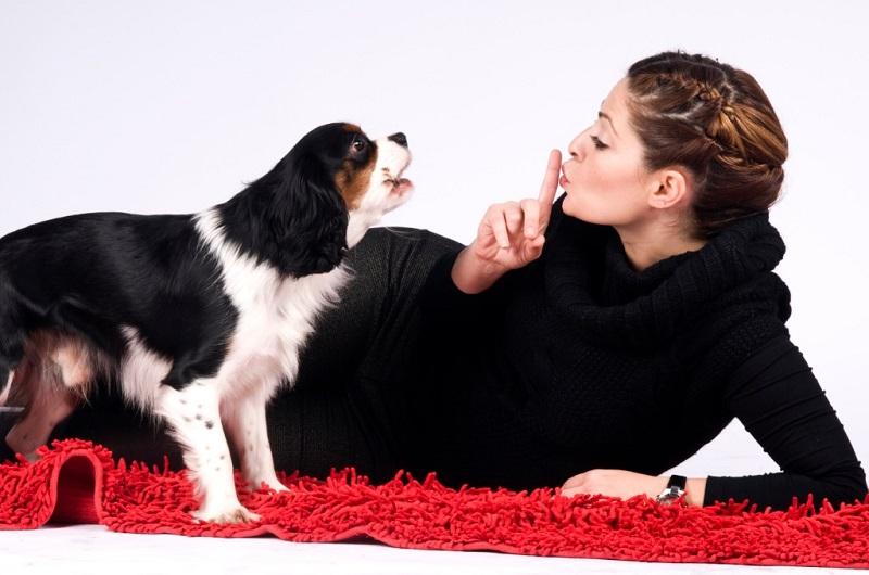 Как отучить собаку постоянно лаять