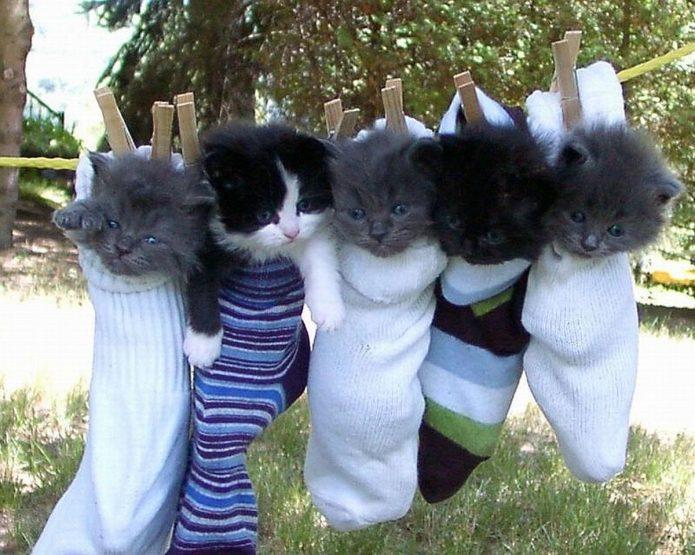 Котята в носках