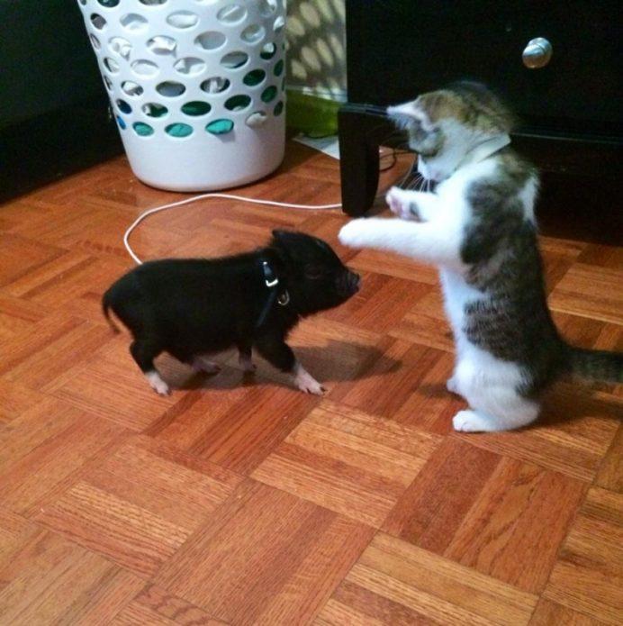 Котёнок и поросёнок