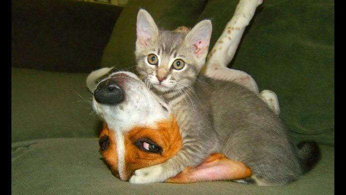 Котёнок лежит на собаке
