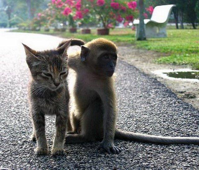 Котёнок и обезьяна