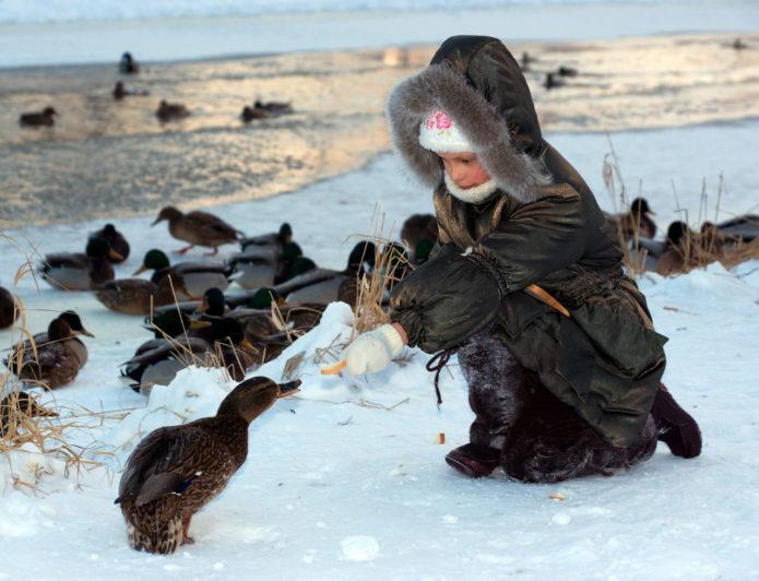 Девочка кормит утку