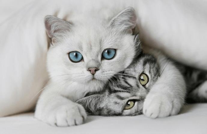 Два милых кота обнимаются