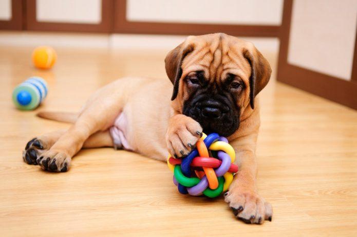 Пёс с игрушками