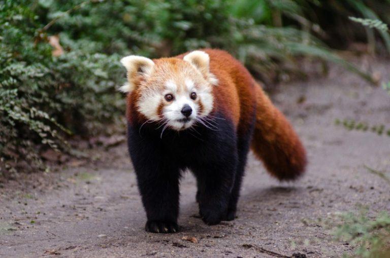 7 самых милых детенышей животных, которые стоят того, чтобы их увидеть
