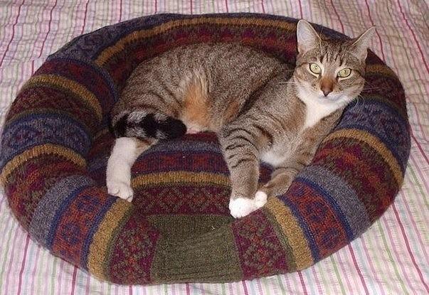 Кошка на лежаке из ситера
