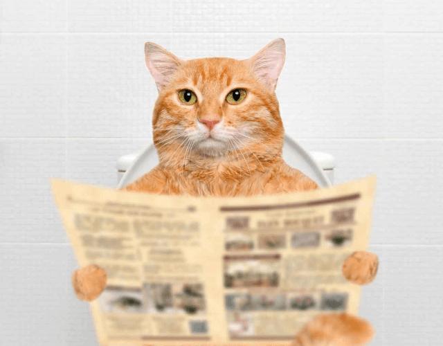 кот с газетой