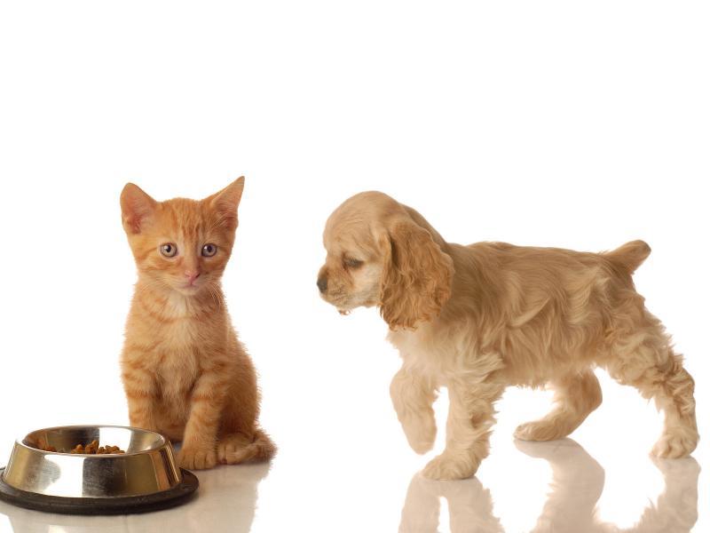 котёнок и щенок с миской