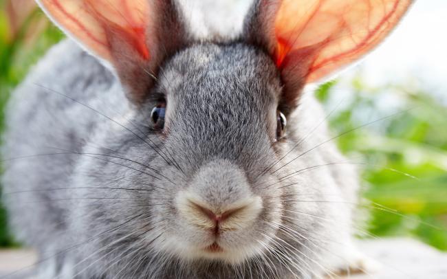 Крольчиха