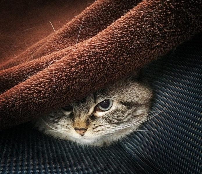 Локи прячется