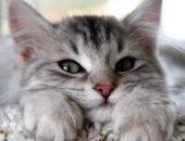 Милый домашний котенок