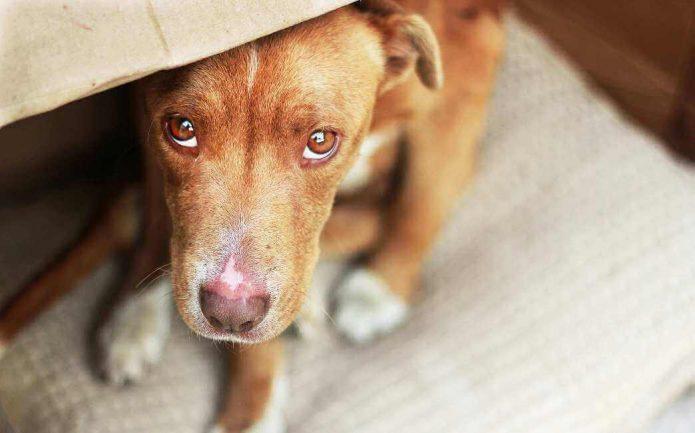 Пёс наказан