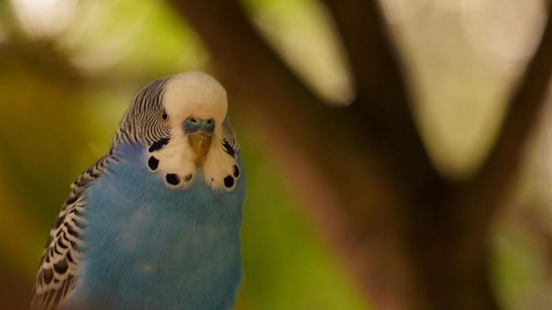 Попугай девочка