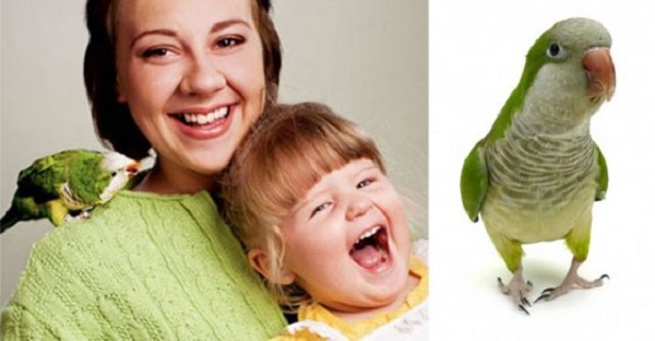 Попугай и девочка