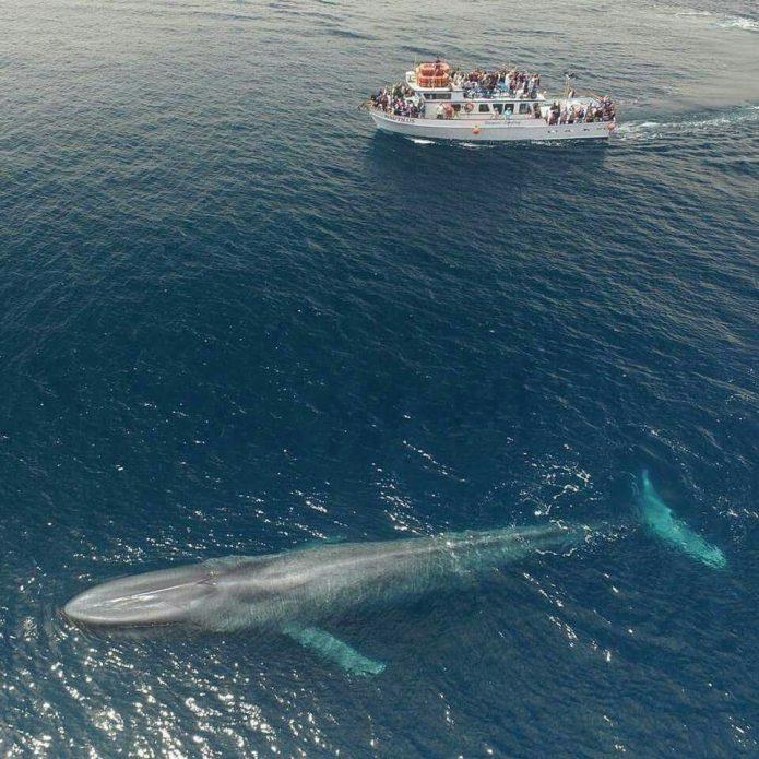 Голубой кит по сравнению с катером