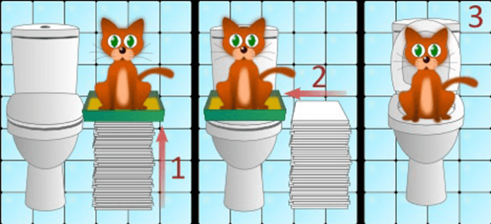 схема приучения кота к унитазу