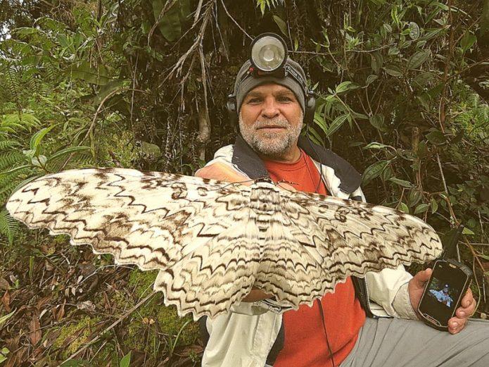 Человек держит в руке самую большую бабочку в мире