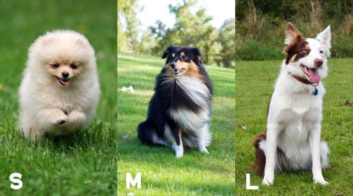 Разные размеры собак