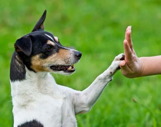 Лапа собаки и рука человека