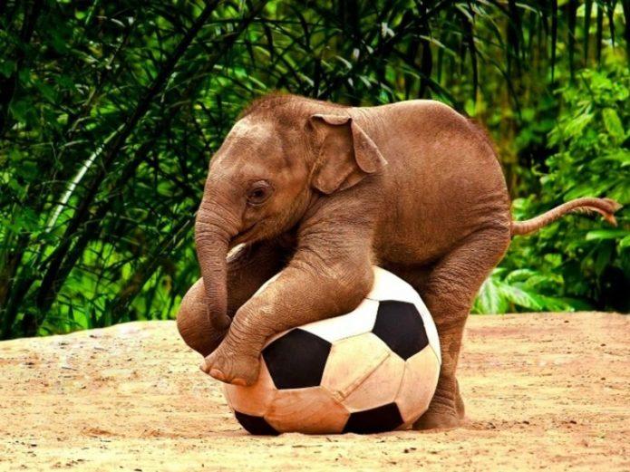 Детёныш слона с мячиком
