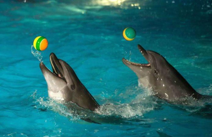 Дельфины ловят мячики