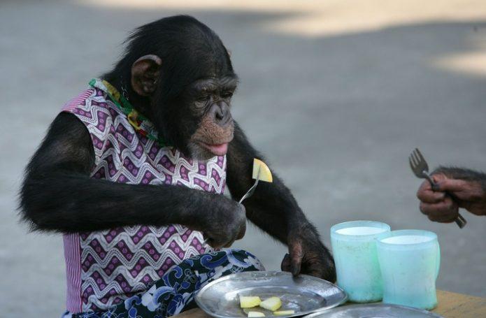 Гоминид ест как человек