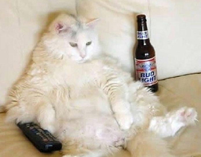 Кот с пультом от телевизора и пивом