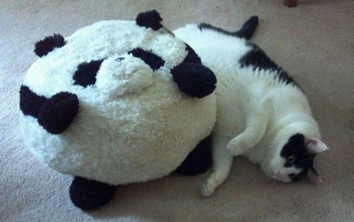Кошка и игрушка-панда