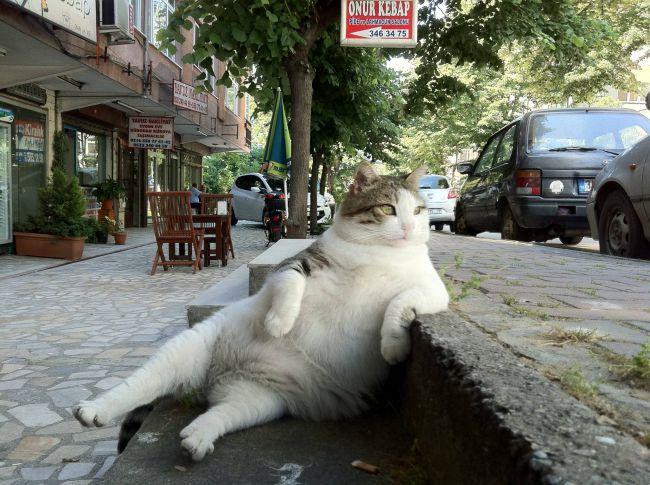 Толстый кот размышляет