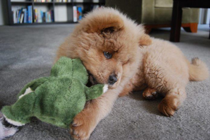 Тупой щенок