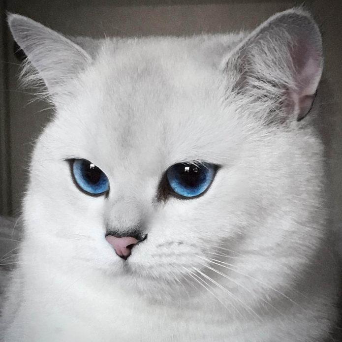 Кошка с самыми красивыми глазами