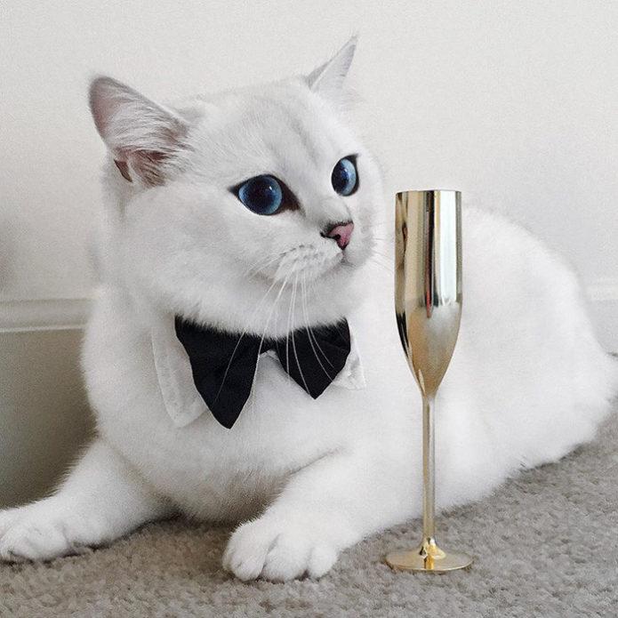 Коби-джентльмен