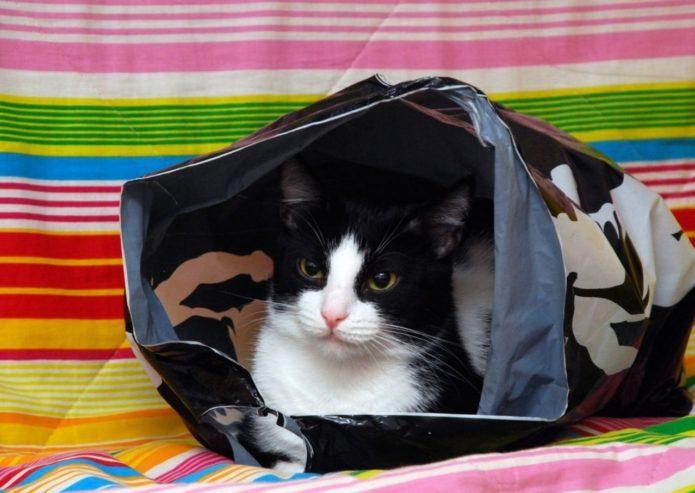 Кошка в пакете