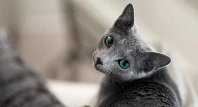 Кошка с изумрудно-зелёными глазами