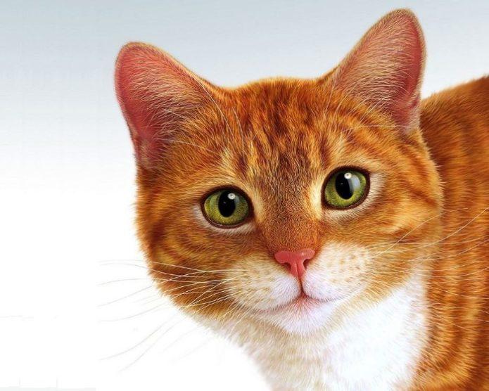 Портретное фото рыжего кота на контрастном фоне
