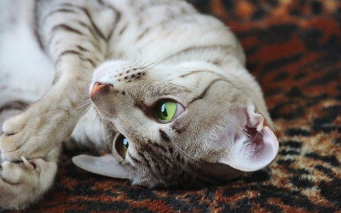 Портет красивого полосатого кота