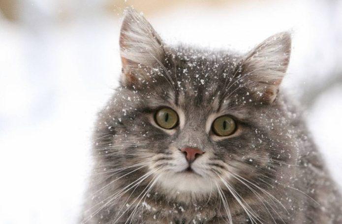 Пушистый кот в снежинках